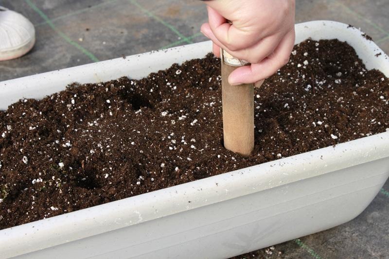 leaved-soil