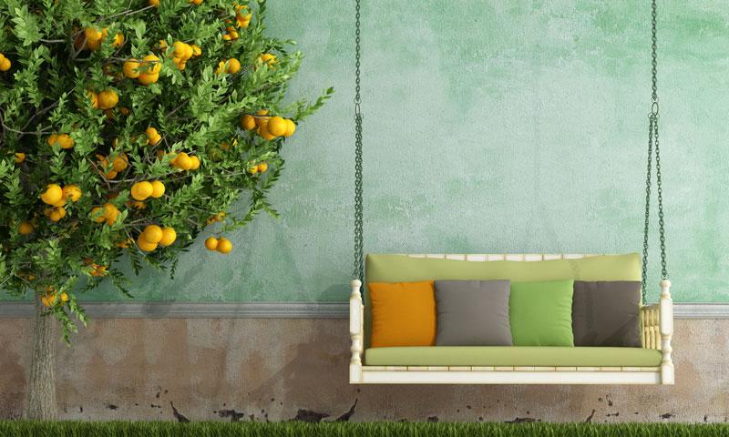 garden_citrus tree