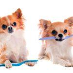 Όταν ο σκύλος μας μυρίζει άσχημα…κρύβεται κάποιο πρόβλημα υγείας;
