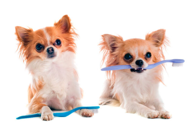 Όταν ο σκύλος μας μυρίζει άσχημα…κρύβεται κάποιο πρόβλημα υγείας;-naturanrg