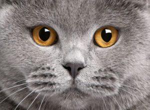Δείτε τον κόσμο με τα μάτια της γάτας