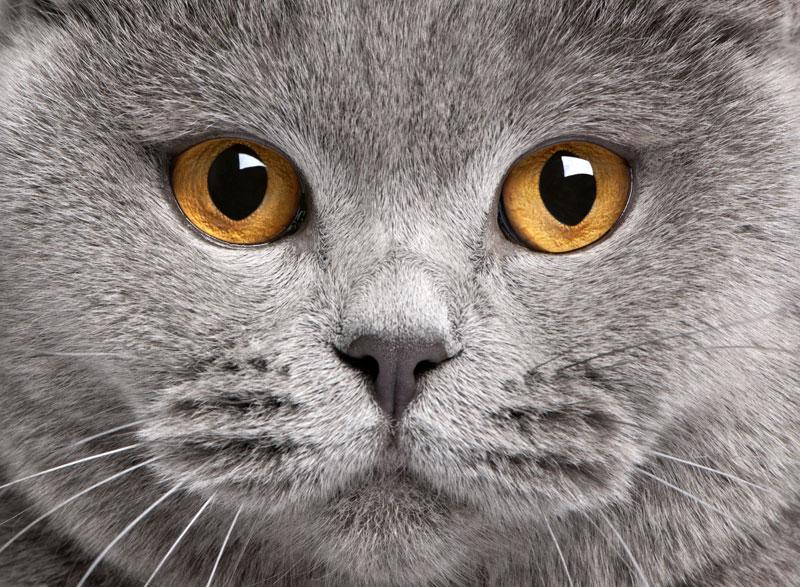 cat_close up