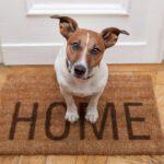 Θέλω ένα ζωάκι στο σπίτι, μπαμπά!