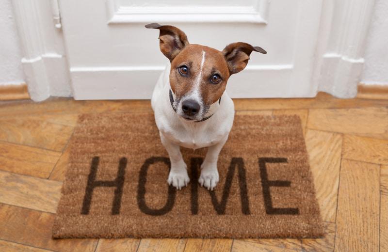 pet-home