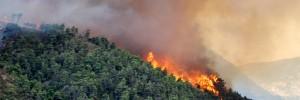 Greece_Forest_Fire