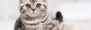 cat-asthma