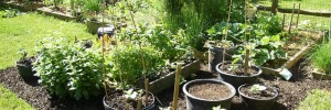 front-lawn-vegetable-garden-19