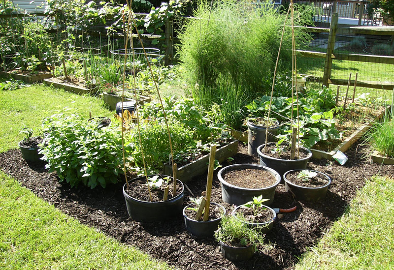 Λαχανόκηποι εντός σχεδίου πόλης!