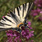 Η «ανάπτυξη»καταστρέφει την ελληνική βιοποικιλότητα