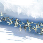 Ταξιδιάρικα πουλιά! Το Συναρπαστικό Ταξίδι της Μετανάστευσης…
