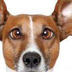 Πώς βιώνουν τα ζώα τα συναισθήματα ;