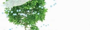 φυτό, δροσερός αέρας