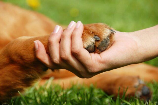 dogs-animals-skulia-anthrwpoi-pshyxiki-ygeia-Naturanrg