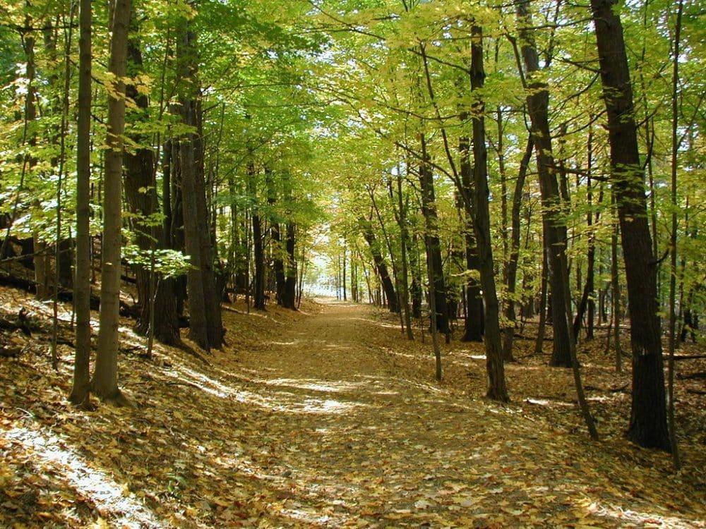 Γιατί βιάζεται το ΥΠΕΚΑ να καταστρέψει τα δάση;