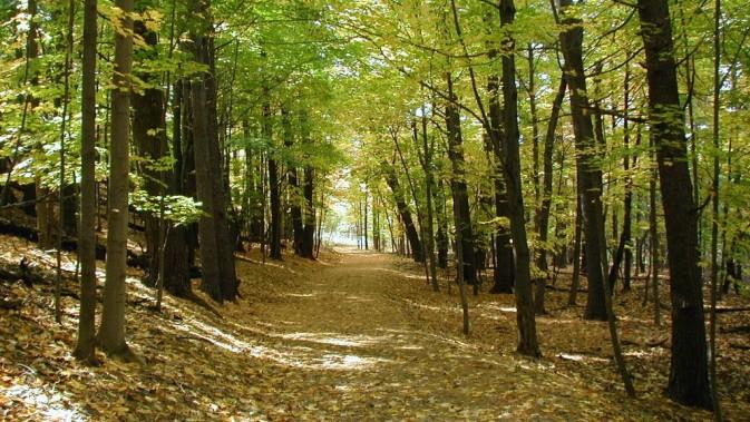 δάση και νομοσχέδιο