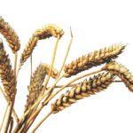 Ψωμί: θρεπτικό ή επικίνδυνο;