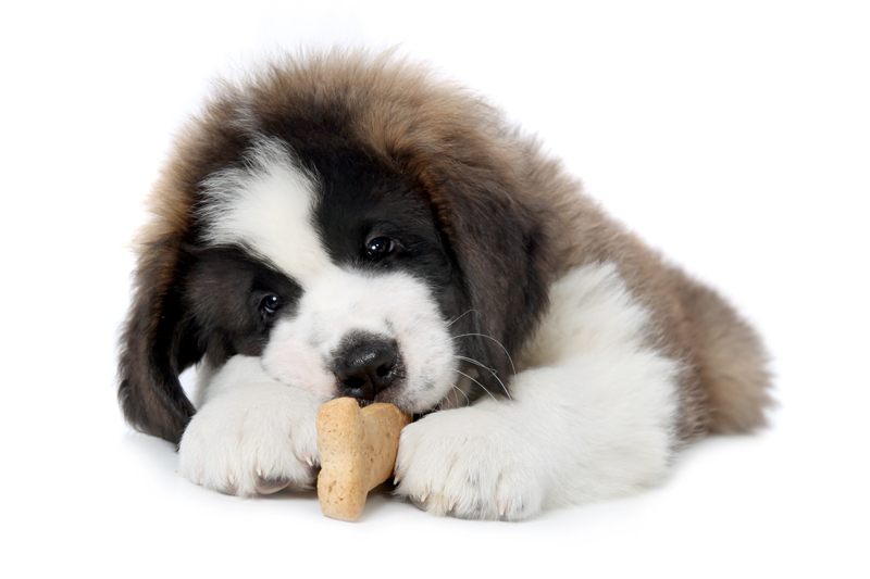 dog-biscuit