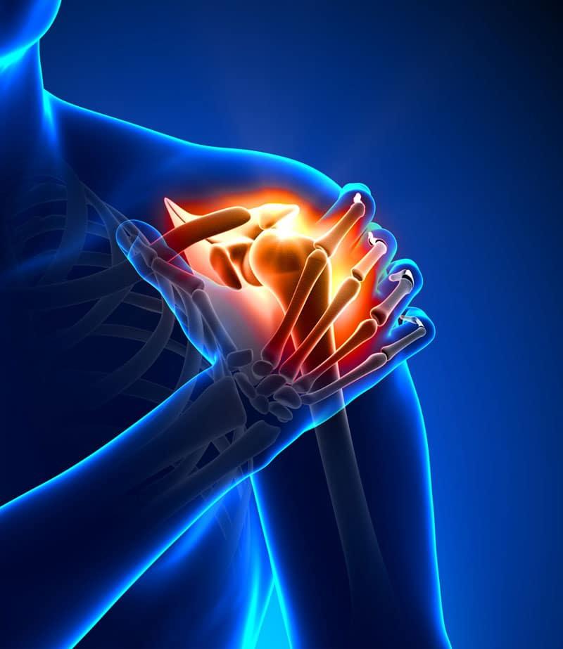 shoulder_bones