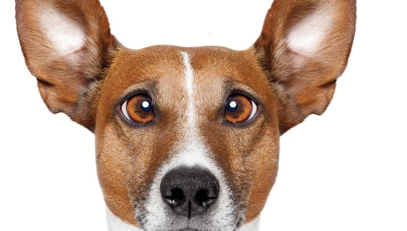Πώς βιώνουν τα ζώα τα συναισθήματα;