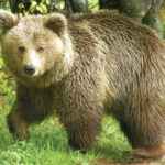 ΑΡΚΤΟΥΡΟΣ: Καταφύγιο ζωής για αιχμάλωτα ζώα