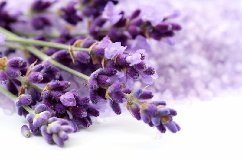 Λεβάντα: Θεραπευτικές ιδιότητες και Συνταγές ευεξίας