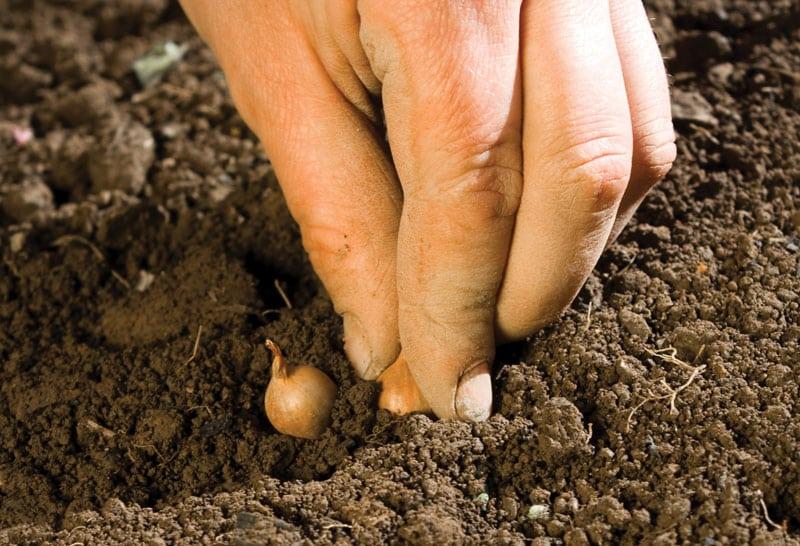soil_hand seeds
