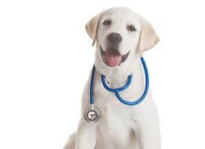 Pet Therapy: τα κατοικίδια είναι οι καλύτεροι… γιατροί του παιδιού!