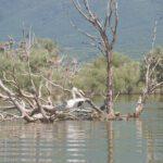 """Λίμνη Κερκίνη: Οδοιπορικό σ"""" ένα μοναδικό υγροβιότοπο"""