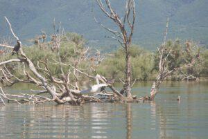 Λίμνη Κερκίνη: Οδοιπορικό σ' ένα μοναδικό υγροβιότοπο