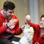Therapy dogs: Οι πρωταγωνιστές της διπλανής πόρτας