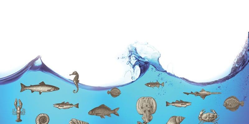ocean_life