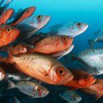 Fishtips …πώς να ψαρεύουμε, για να έχουμε!