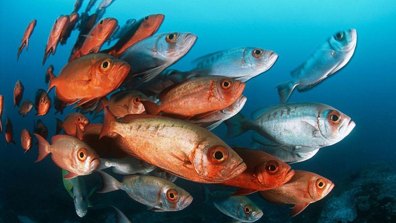 fish-eat