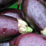 Μελιτζάνα: Η μελαψή κυρία του καλοκαιριού
