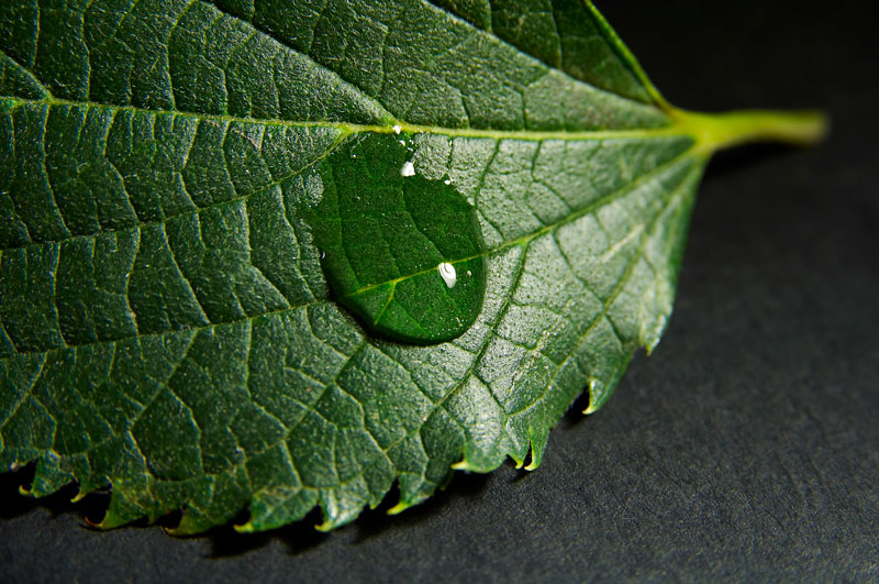 green leaf, water drop