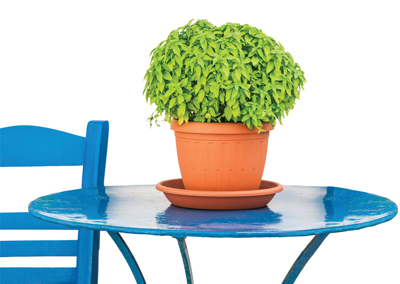 basil, blue chair, Greece