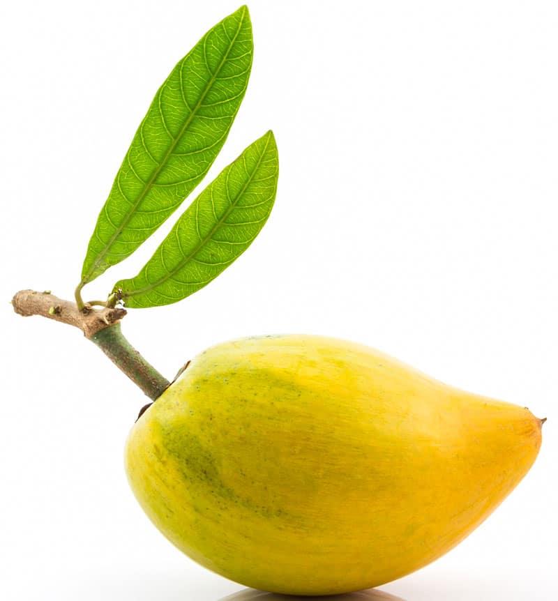 sapote_fruit