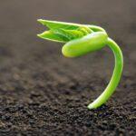 Κρατήστε σπόρους για την επόμενη χρονιά!