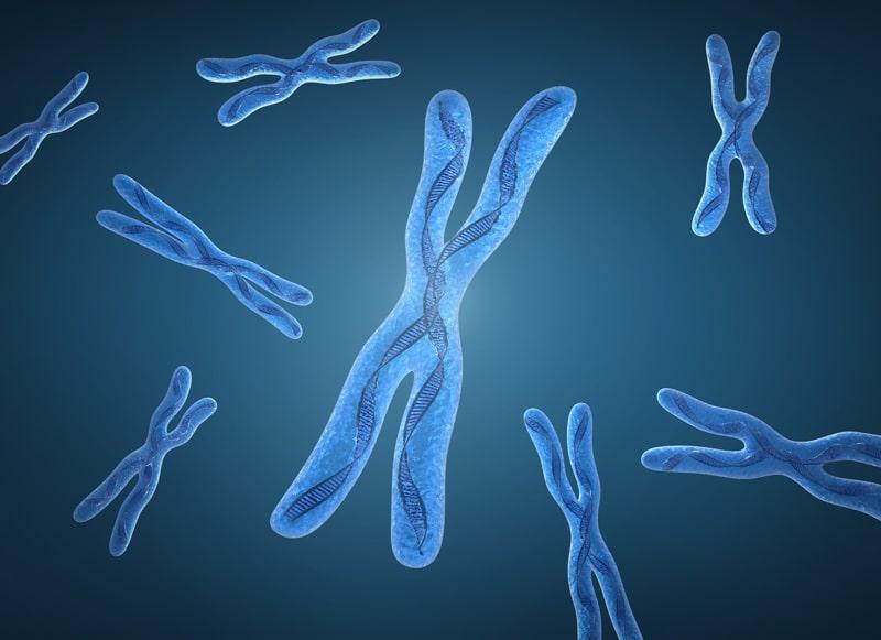 Chromosome-X