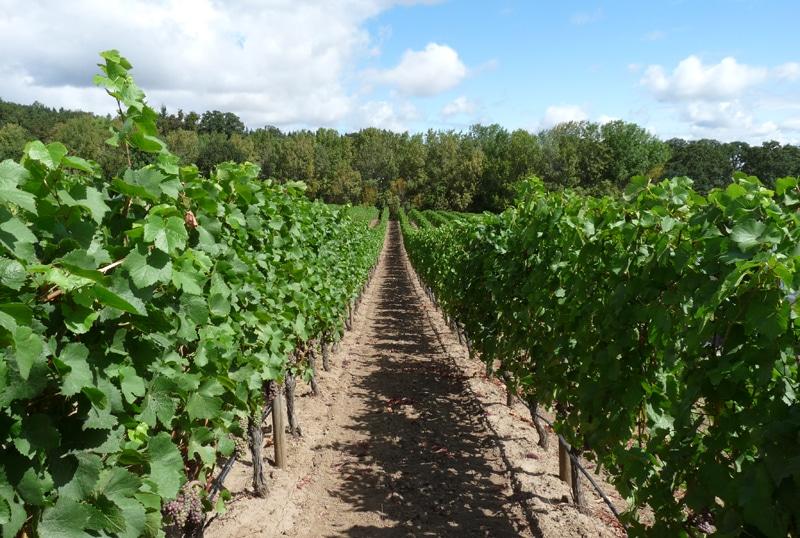 Vineyard-Επιστροφή στη φύση