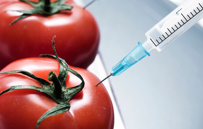 Tomato-GMO