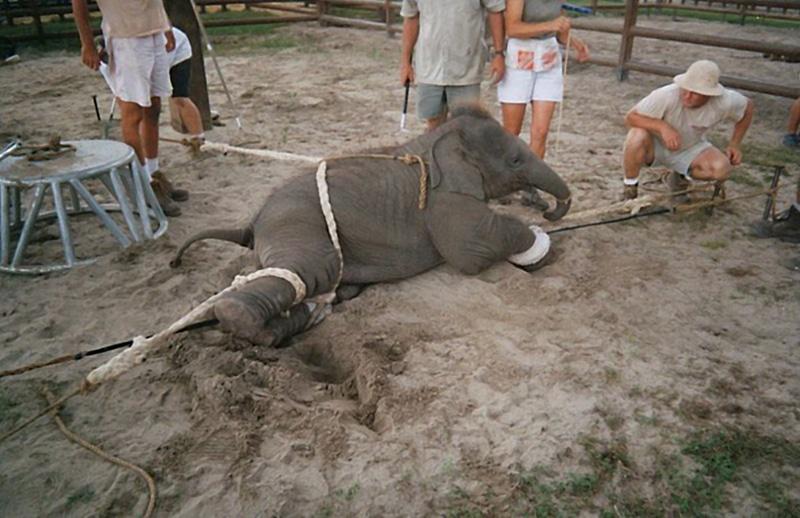 Απαγορεύτηκαν τα τσίρκα με ζώα στην Ολλανδία