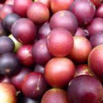 Βιταμίνη C: Ποια τρόφιμα περιέχουν περισσότερη από τα πορτοκάλια