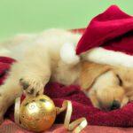 Αφήστε το πνεύμα των Χριστουγέννων να σας παρασύρει