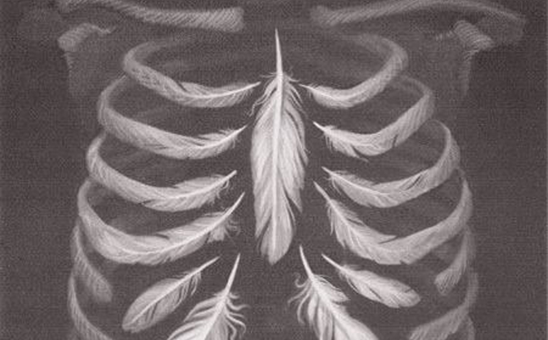 feathers-and-rib-cage