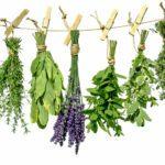 Αρωματικά φυτά – πολλαπλασιασμός με μοσχεύματα