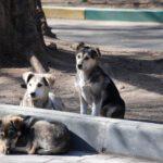 Δευτέρα 4 Απριλίου: Ημέρα αφιερωμένη, από τον δήμο Αθηναίων, στη φροντίδα των αδέσποτων ζώων