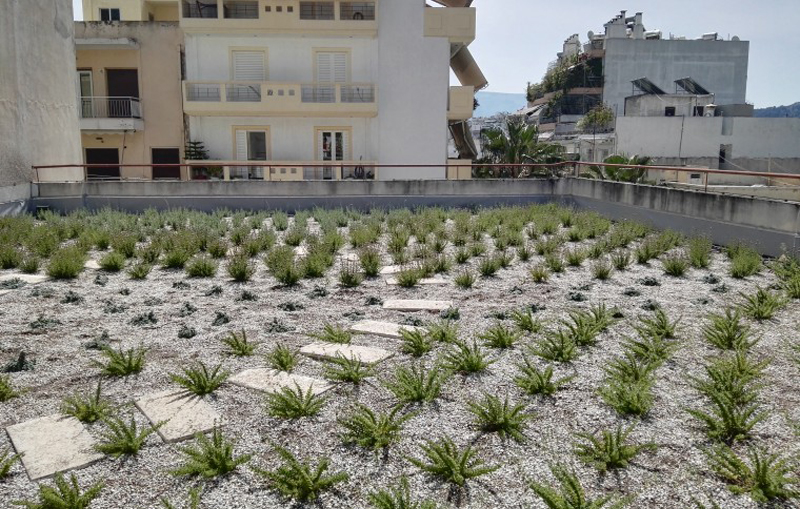green-roof-school-«Πράσινα Δώματα» σε 13 σχολικά συγκροτήματα