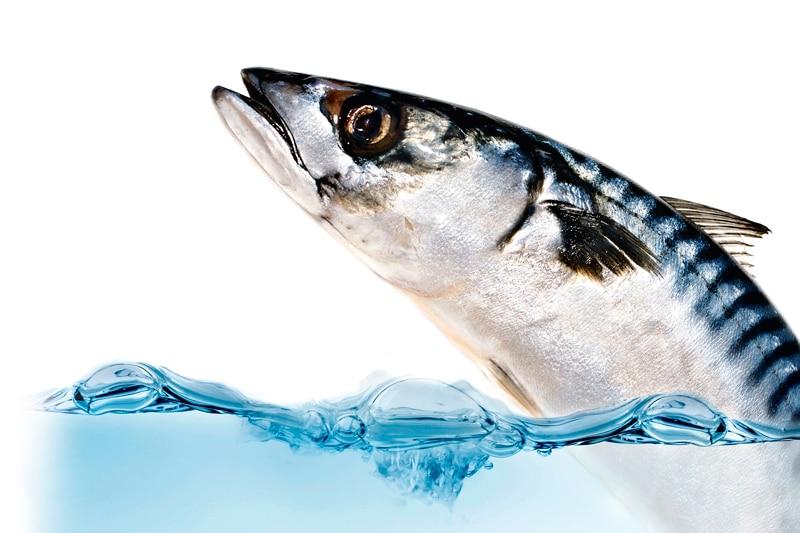 Ψάρια όχι μόνο για τα μάτια αλλά και για τη μνήμη