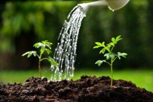 Ποτίστε σωστά τα φυτά σας το καλοκαίρι
